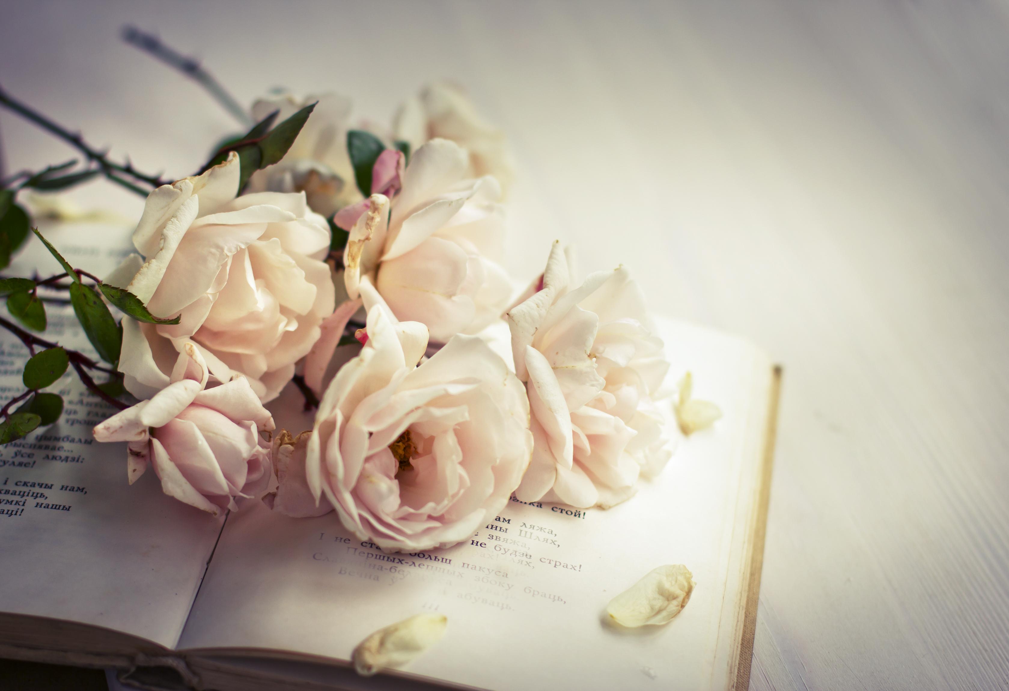 4 kérdés, amit minden romantikus regény írónak fel kellene tennie magának