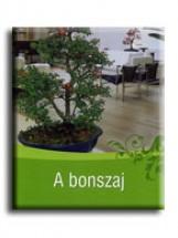 A BONSZAJ - Ekönyv - ZANINI,TIZIANO